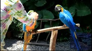 Blue and Gold Macaw Hello!!! - www.green-world.com.tw