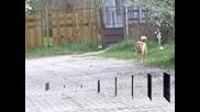 """""""Екоравновесие"""" откри случаи на фалшиво кастриране на кучета"""