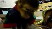 Маймунка се грижи за котка.