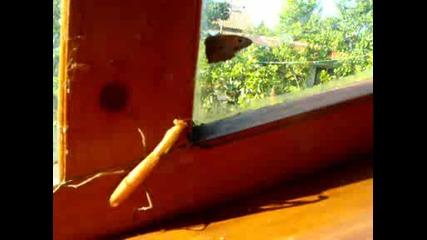 богомолка и пеперуда 1 част