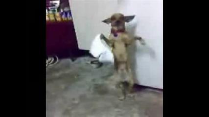 Кучешко Хоро