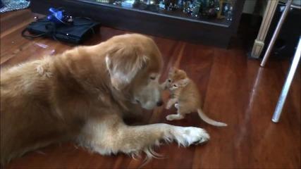 Какво ценно приятелство!