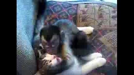 Маймуна се е влюбила в котка