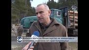 Мобилни екипи на Министерство на земеделието установиха незаконна сеч край Копривщица