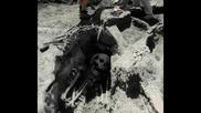Гигантски човешки скелети намерени в Гърция
