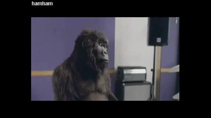 Не просто горила човече