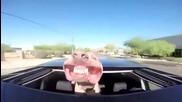 Смешно куче се вози на кола а вятърът му духа муцуната!смях!заслужава да се види!