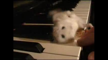 Смях: Мишле Непукист На Пиано