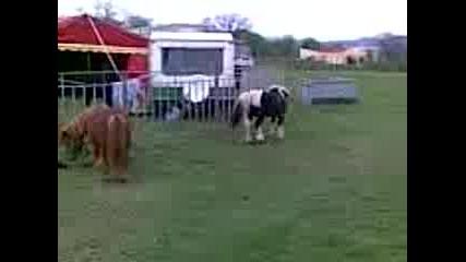 Игривите Животни В Цирка !