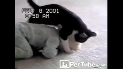 свободна борба между коте и бебе (смях)