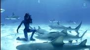Подводен танц с тигрови акули ! Нещо невероятно !!!