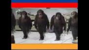 Маймуни Танцуват - Супер Смях!!!