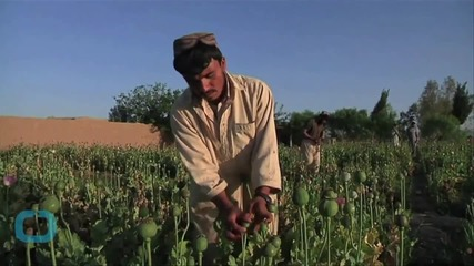 Find Out How Provincial Afghan Clinics Are Helping Drug Addicts