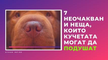 7 неочаквани неща, които кучетата могат да подушат