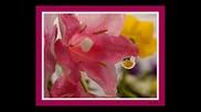Красота от цветя (релакс)