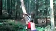 Дърво си отмъсти на идиот