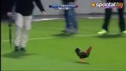 Непослушен петел ядоса стюарди и футболисти на мач в Израел