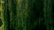 Великите художници- Клод Моне