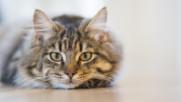 6 Интересни факта за котките