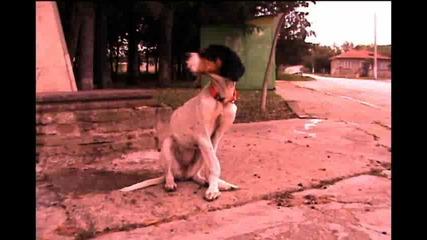 Живота на едно куче (кратък филм за тъгата)