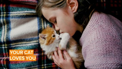 Study proves that cats get attached to their owners