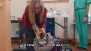 Възстановяването на мелез след пожар | Юконски ветеринар