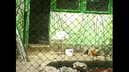 Снимки от зоогическата градина в град софия - 4 част