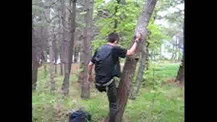 Мъро Се Катери На Дърво