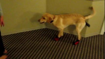 """Куче """"ходи"""" с обувки"""