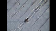 Врана се пързаля на покрив , като сноубордист!