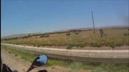 Моторист спасява малко теленце от удавяне