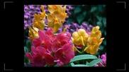 Танцът на орхидеите... (еrnesto Cortazar)... ...
