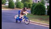 умно куче кара колело