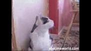 Сладко Метал Коте