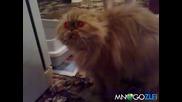 Пияна котка говори несвързано - смях до насиране ! ! Vbox7