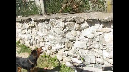 Едно Страхотно Куче :d