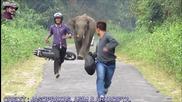 Слон срещу мотористи!