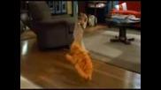 Танцуващия гарфилд :)