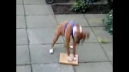 Boxer {funny}