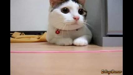 Техно Котка!