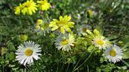 Пролетта дойде с ухание на цветя и вълшебната песен на птиците