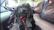 Хора спасяват куче изоставено на улицата