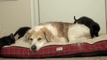 Сладко приятелство между куче и котета!