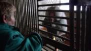 Как маймуната Шмоко се справя със зимата в Шумен?