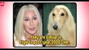 Животни, които изглеждат като Знаменитости - Смях