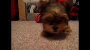 Много злобно кученце:):)