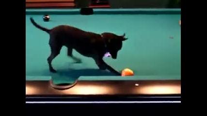 Малко Кученце играе билярд :)