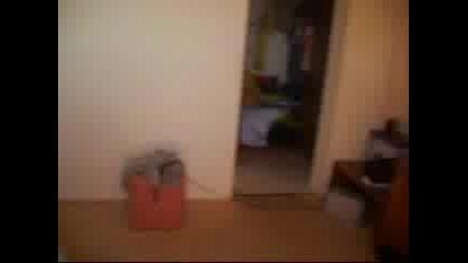 Arapya 2007 стаята