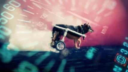Да спасиш живот или да си купиш кола? Мими- най-бързото куче!