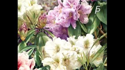 Цветя, цветя, цветя